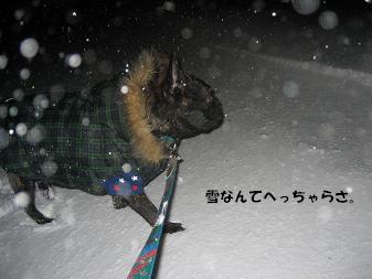 吹雪なんてへっちゃらさー。