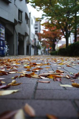 強風の日なら落ち葉がいっぱい!
