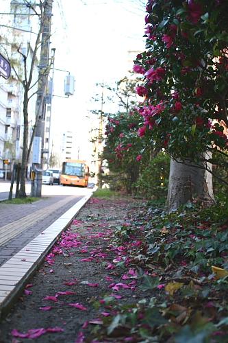 地面は花びらのピンクと落ち葉で美しい