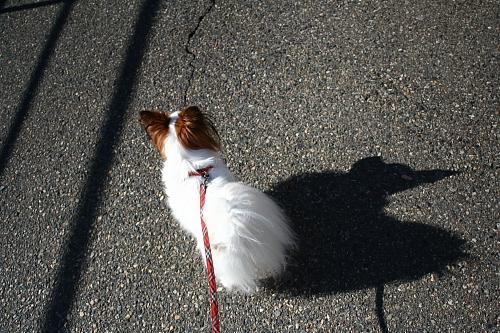 サリーの影が風見鶏みたいだ・・・