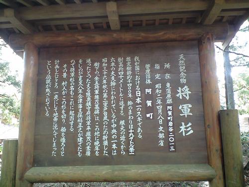 幹の周りの長さが日本一ということらしい