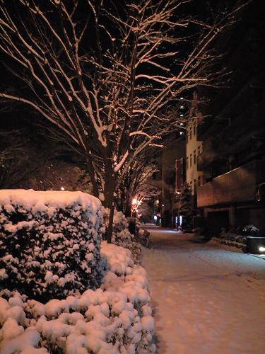 ドサっと雪が降った。でも、2-3日で解けたね。。。