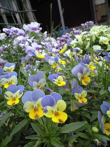 そろそろ夏の花を植えないと・・・