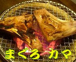 090309_maguro.jpg