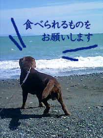 090615_umi.jpg