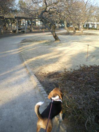 遠くの公園に、遠征!
