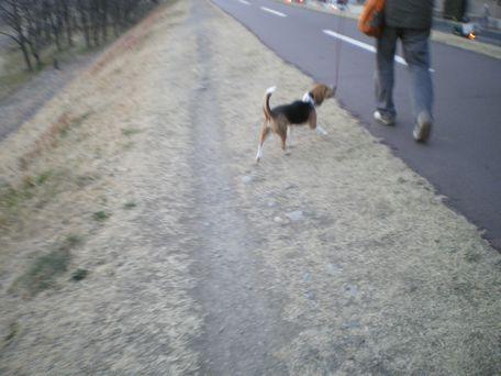 ウキウキお散歩!