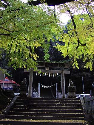 岩部神社イチョウ1