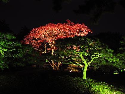 栗林公園ライトアップ2