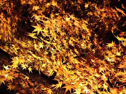 栗林公園ライトアップ3