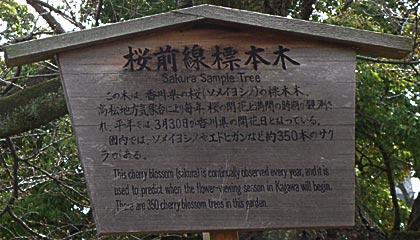 09標本木1