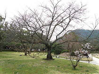 09標本木3