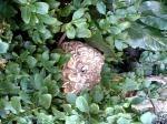スズメ蜂 2
