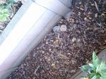 スズメ蜂 14