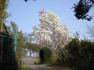 横浜磯子散策-05