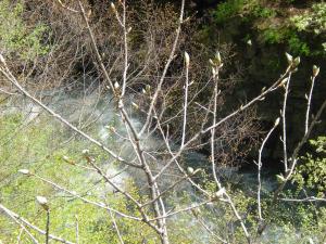 川原湯温泉に行きました。-07