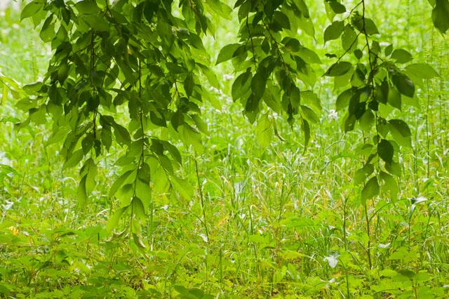 神代植物園09