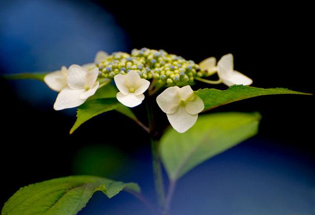 神代植物園06