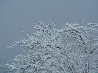 樹にも雪が・・・