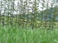 畑はいろんな「緑」色