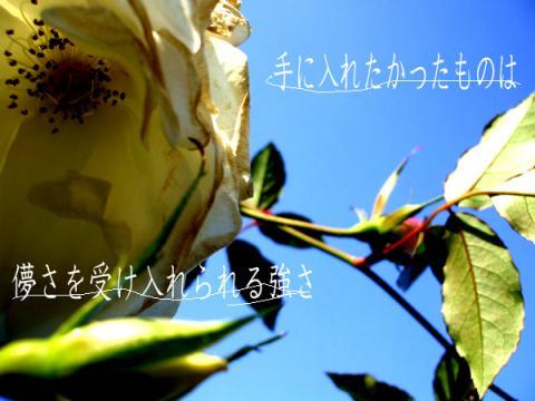 photo9_convert_20080225223251.jpg