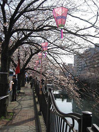 大岡川桜2