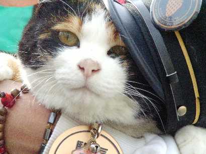 猫の駅長2