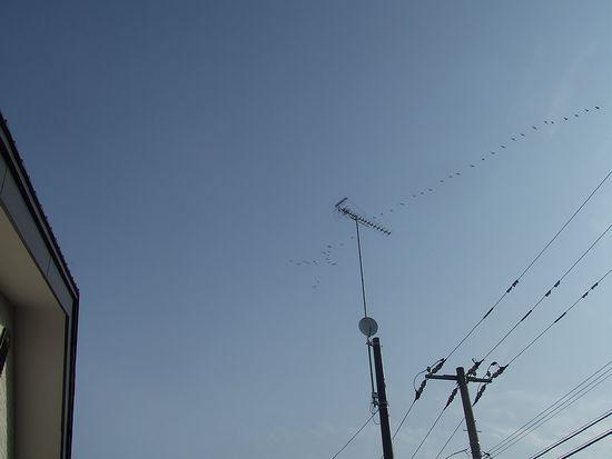 090322-swan-k.jpg
