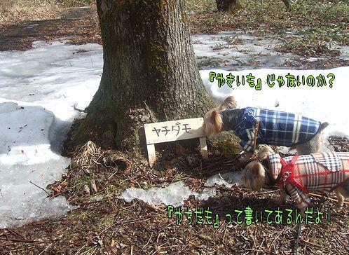 090323-haginosato2.jpg