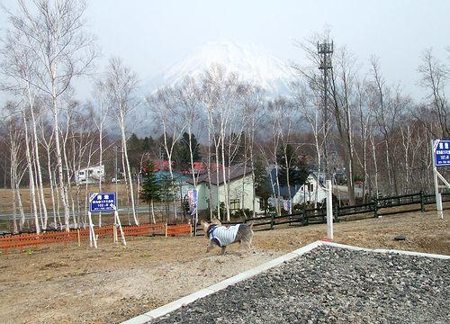 090502-niseko13.jpg