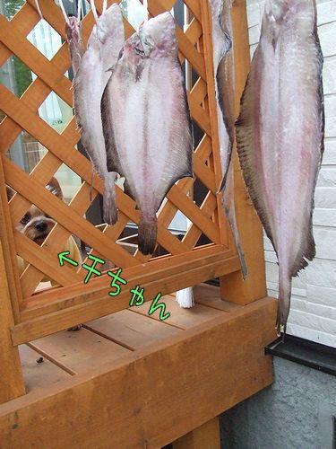 090528-karei2.jpg