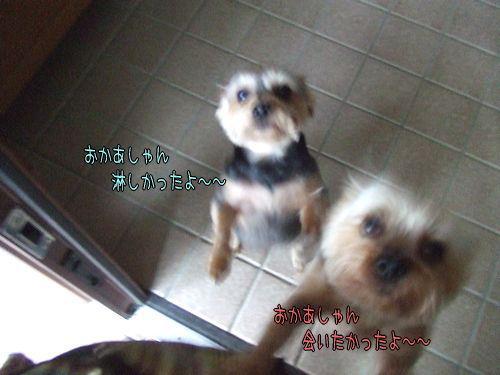 090530-wan4.jpg