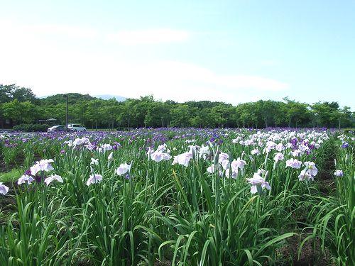 090720-yunomi.jpg