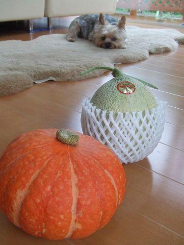 090726-melon1.jpg