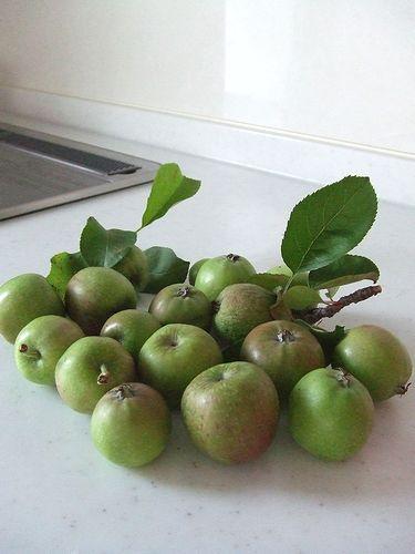 090730-apple1.jpg