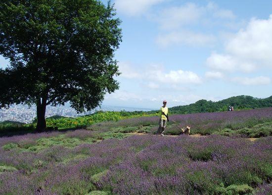 090730-lavender7.jpg