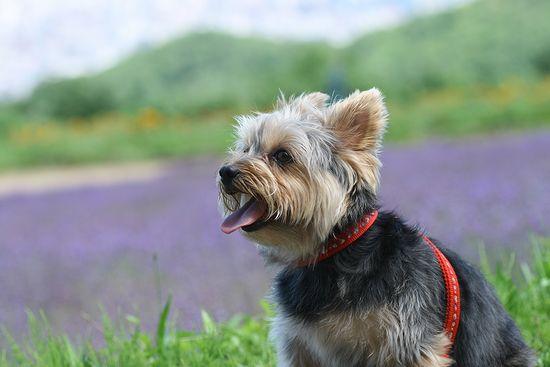 090730-lavender9.jpg