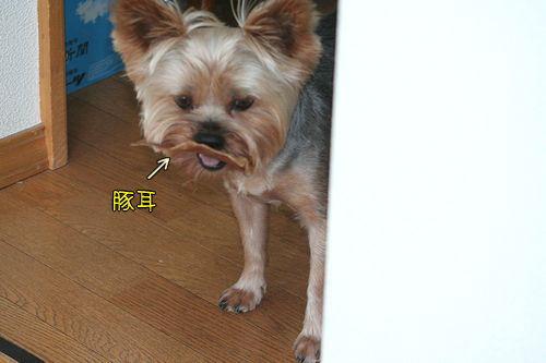 090819-butamimi1.jpg
