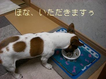 2009_0204_105347-CIMG1438.jpg