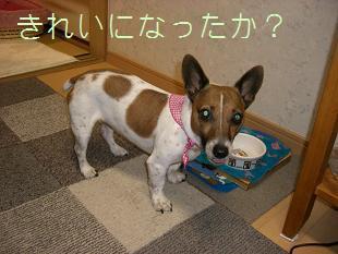 2009_0212_172710-CIMG1490.jpg
