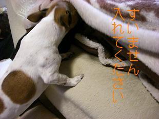 2009_0221_222244-CIMG1587.jpg