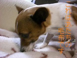 2009_0221_222319-CIMG1588.jpg