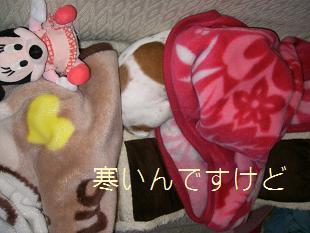 2009_0227_174523-CIMG1638.jpg