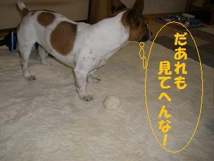 2009_0315_191359-CIMG1787.jpg