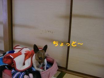 2009_0421_140211-CIMG2185.jpg