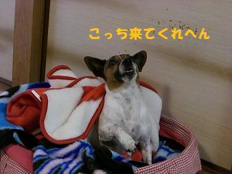 2009_0421_140235-CIMG2186.jpg