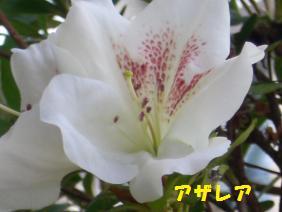 2009_0423_121401-CIMG2234.jpg