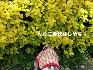 2009_0423_143745-CIMG2265.jpg