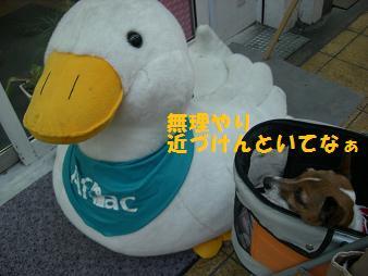 2009_0508_172447-CIMG2379.jpg