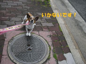 2009_0524_174522-CIMG2416.jpg